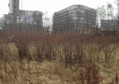 Japanese Knotweed & Giant Hogweed- Manchester City Centre
