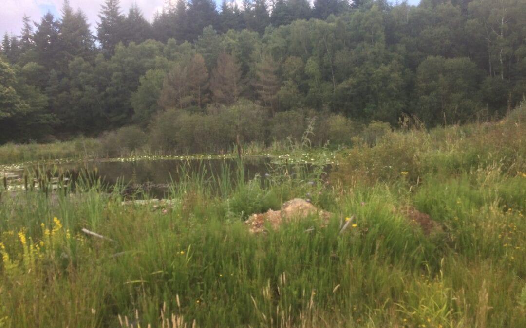 Ecologically Sensitive Brownfield Regeneration
